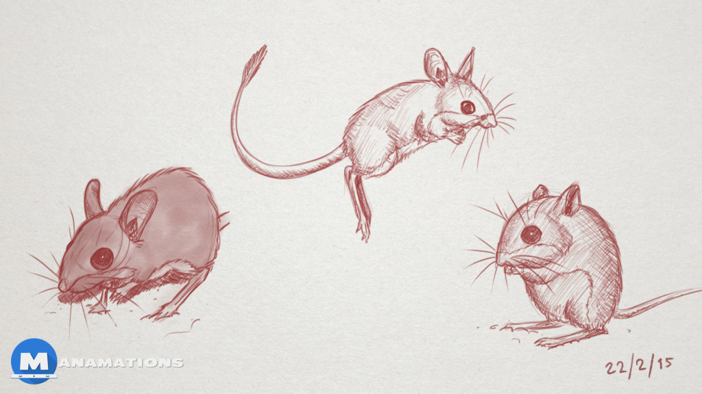Spinifex Hopping Mouse Sketch - By Manamations